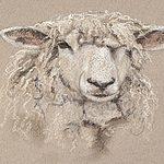 Shearling Ewe(P)