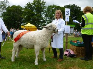 Davina Stanhope at Berkeley Show with Tingewick Ferdi, Native and Interbreed Champion