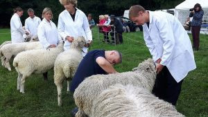 Ian Brooksbank judging Wool on the Hoof at the Summer Show