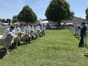 Thomas Jackson judging at the Three Counties Show